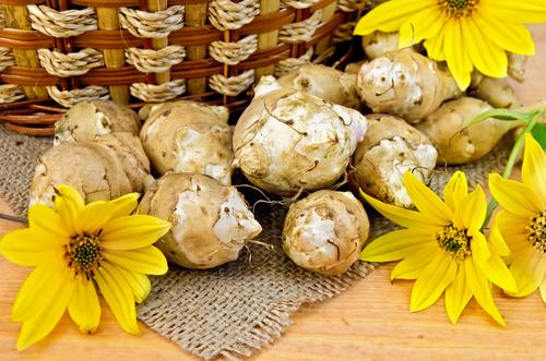 Topinambur-Blüten